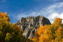 Fall Comes To The Eastern Sierra's Royalty Free Stock Images