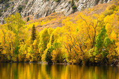 Fall Comes To The Eastern Sierra's Royalty Free Stock Photo