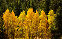 Fall Comes To The Eastern Sierra S Stock Images