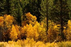 Fall Comes To The Eastern Sierra S Royalty Free Stock Photos