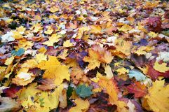 Fall is coming in Sweden royalty free stock images