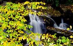 A white water stream rushes through a changing landscape in early fall. Stock Photography