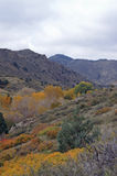 Fall coming. To the high desert stock image
