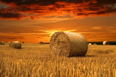 Fall is comming. Field with hay and beauty sky royalty free stock photo