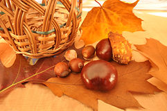 Fall composition Royalty Free Stock Image