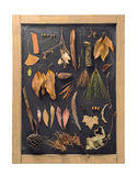 Fall composition autumn leaf blackboard vintage Stock Image