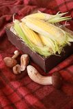 Fall composition for thanksgiving day with corn,apple,mushrooms and pumpkin. stock photos