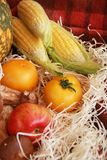 Fall composition for thanksgiving day with corn,apple,mushrooms and pumpkin. Fall composition for thanksgiving day with corn,apple,mushrooms and pumpkin stock images