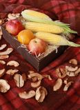 Fall composition for thanksgiving day with corn,apple,mushrooms and pumpkin. Fall composition for thanksgiving day with corn,apple,mushrooms and pumpkin royalty free stock images