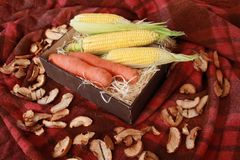 Fall composition for thanksgiving day with corn,apple,mushrooms and pumpkin. Fall composition for thanksgiving day with corn,apple,mushrooms and pumpkin royalty free stock image