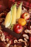 Fall composition for thanksgiving day with corn,apple,mushrooms and pumpkin. Fall composition for thanksgiving day with corn,apple,mushrooms and pumpkin royalty free stock photography