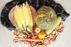 Fall composition for thanksgiving day with corn,apple,mushrooms and pumpkin. royalty free stock photos