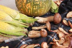 Fall composition for thanksgiving day with corn,apple,mushrooms and pumpkin. royalty free stock photography