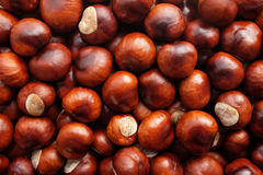 Fall conkers background Royalty Free Stock Image