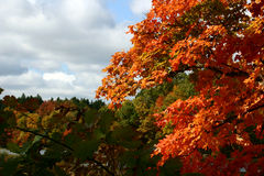 Fall Contrasts. Green and flaming orange fall foliage against a partially cloudy sky royalty free stock photos