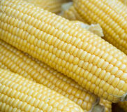 Fall corn Stock Photos