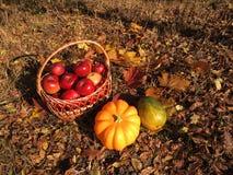 Fall cornucopia Stock Image