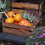 Fall at country house. Stock Images
