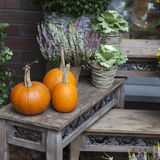 Fall at country house. Stock Image