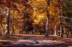 Fall country path Stock Photos