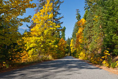 Fall Country Road. A country road in the Fall season with bright maple trees mixed with fir and pine Royalty Free Stock Photos
