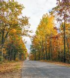 Fall  Country Road. Country Road with Fall foliage along both sides Stock Photo