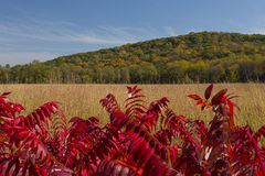 Fall Country Scenic Stock Image