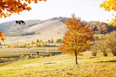 Fall Countryside Landscape with Colorful Trees and Meadows Royalty Free Stock Photo