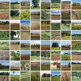 Fall countryside mosaique Royalty Free Stock Photo