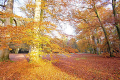 Fall in the countryside from Netherlands Stock Photo