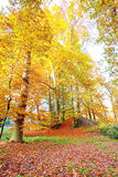 Fall in the countryside from Netherlands Stock Photography