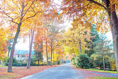 Fall in the countryside from Netherlands Royalty Free Stock Photo
