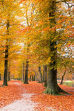 Fall in the countryside from Netherlands Stock Images