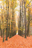 Fall in the countryside from Netherlands Royalty Free Stock Images