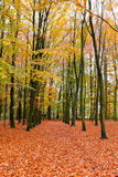 Fall in the countryside from Netherlands Royalty Free Stock Photography