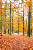 Fall in the countryside from Netherlands Royalty Free Stock Image