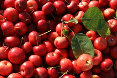 Fall Crab Apples background Stock Images