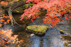 Fall creek royalty free stock images