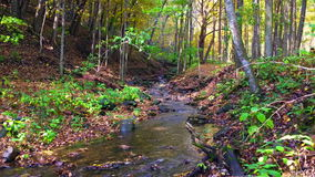 Fall Creek. A beautiful, calm, peaceful creek in the middle of fall stock video footage