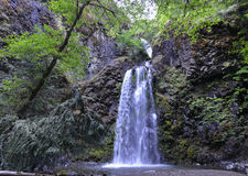Free Fall Creek Falls, Oregon Royalty Free Stock Photography - 42894427