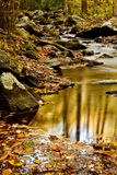 Fall creek with rocks and trees. Picture of river flow with rocky boulders and fall leaves Stock Photography