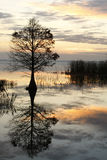Fall Cypress Tree Reflected at Sunrise Royalty Free Stock Photography