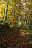 Fall in Czech forests Royalty Free Stock Images