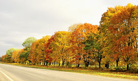 Fall day Stock Image