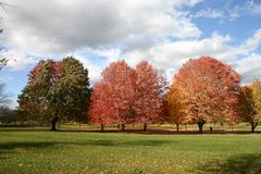 Fall Day. A beautiful fall day with trees turning color and dark clouds Royalty Free Stock Photography