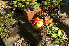 Fall Day - Apples in Basket Stock Image