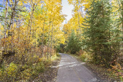 Fall Day. The colours of Fall on a walk through a park in Edmonton Alberta Stock Photography