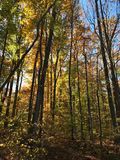 Fall day 3. Fall foliage in the Shenandoah Valley Virginia Royalty Free Stock Photo