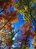 Fall day. Fall foliage in the Shenandoah Valley Virginia Stock Photos