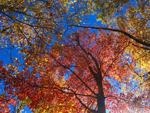 Fall day. Fall foliage in the Shenandoah Valley Virginia Stock Photography